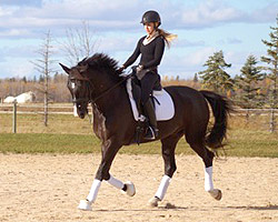 smart horse quotes